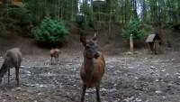 Strzałowo - Paśnik - Zwierzęta w lesie