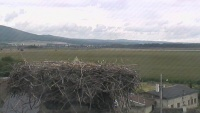 Plinkout - Storks