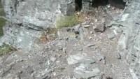 Eifel - Eurasian eagle-owl