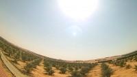 Rijad - Al Garbiah Farm