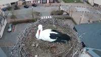 Sarralbe - Storks