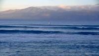 Kihei - Hawaiian Islands Humpback Whale