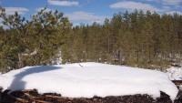 Northern Satakunta - Osprey