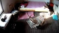Voloder - Stari Maček Cat Shelter