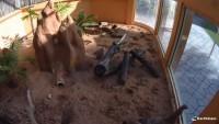 Miami - Zoo - Erdmännchen