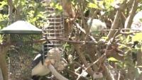 Virum - Bird feeder
