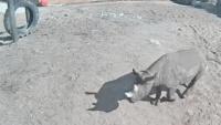 Tallinn - Ogród zoologiczny