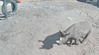 Tallinn - Zoological Garden