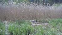 Włoszakowice - Żuraw