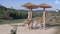 Prague - Zoo